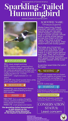 Sparkling-tailed Hummingbird Infographic