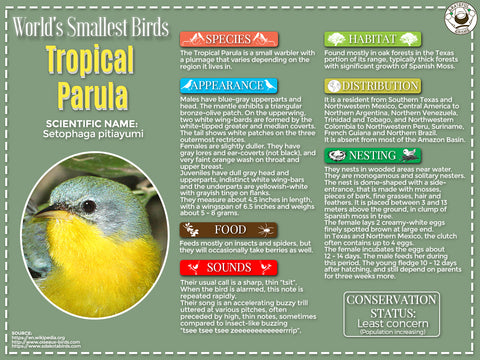 Tropical Parula infographic