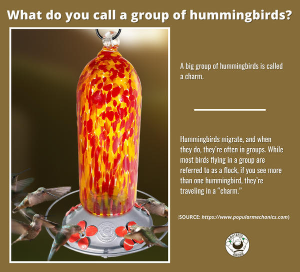 what-do-you-call-a-group-of-hummingbirds
