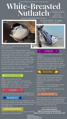 White-Breasted Nuthatch Infographic