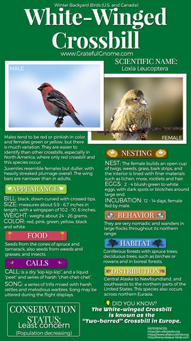 White-Winged Crossbill Infographic