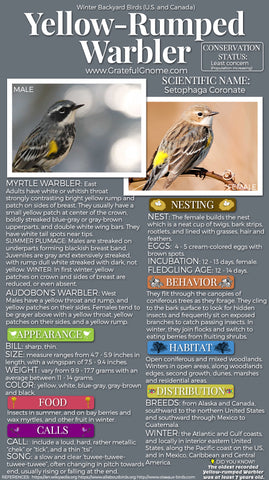 Yellow-Rumped Warbler Infographic