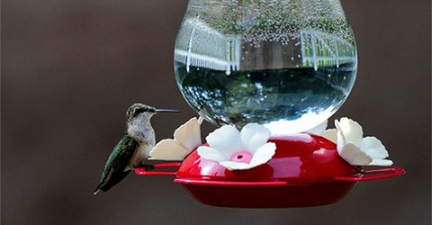 about hummingbird feeders
