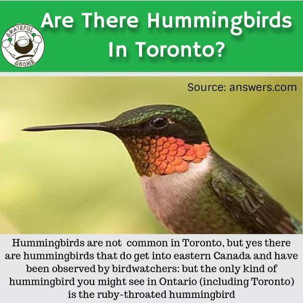 are there hummingbirds in toronto
