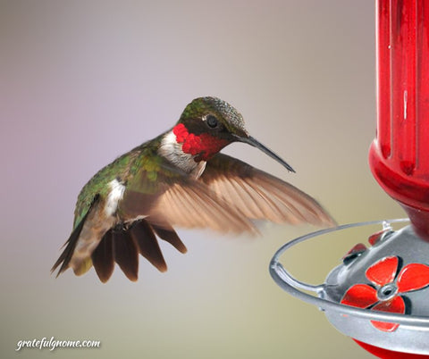 feeding-hummingbirds-with-a-blown-glass-hummingbird-feeder