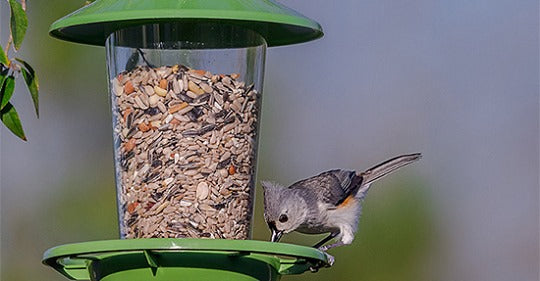 heres-what-to-feed-your-summer-bird-feeder-visitors