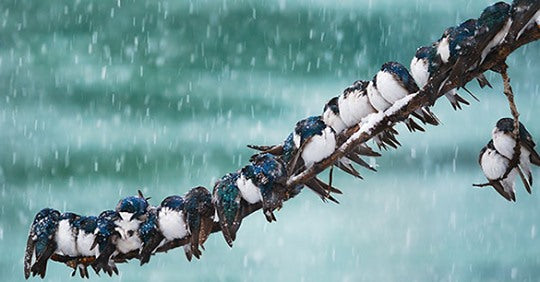 how-do-birds-keep-warm-in-the-winter
