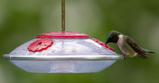 how-to-stop-hummingbird-feeder-leaks