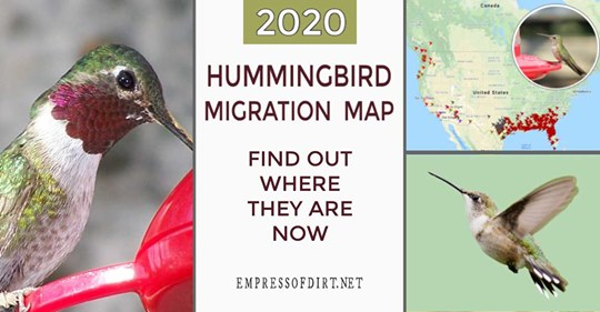 hummingbird-migration-map