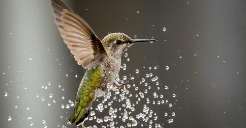 more-ways-to-attract-hummingbirds