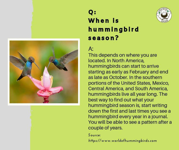 question-and-answer-hummingbird-fact