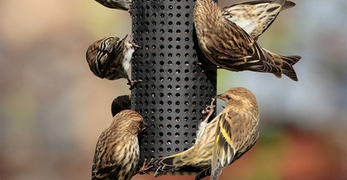 seven-reasons-the-winter-of-2020-2021-is-predicted-to-be-good-for-bird-feeding