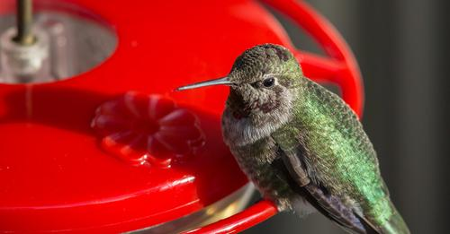 the-best-way-to-feed-hummingbirds-in-warm-weather