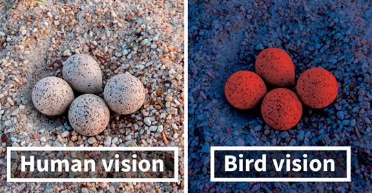 this-is-how-birds-see-the-world-as-compared-to-humans