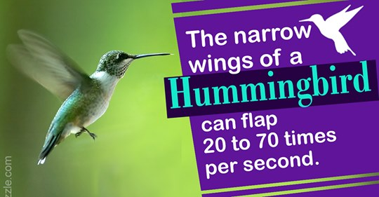 unbelievably-brilliant-facts-about-hummingbirds