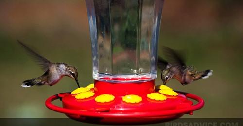 when-to-feed-hummingbirds