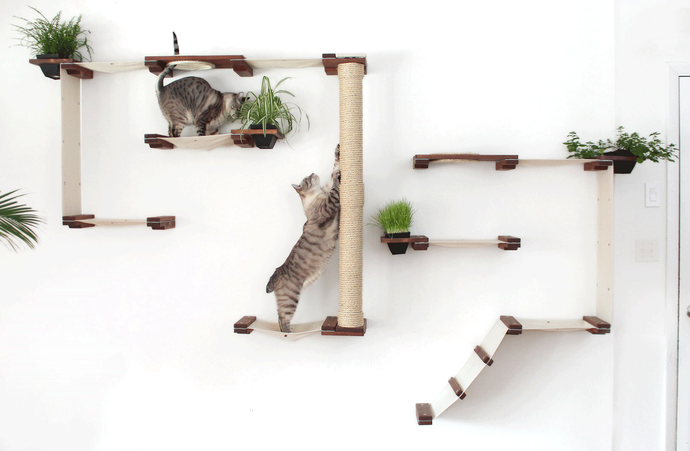 6 Climbing Walls Your Cat Will Love