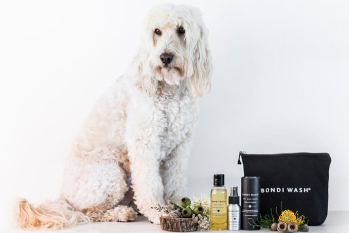 Spotlight On: Bondi Wash Dog Wash