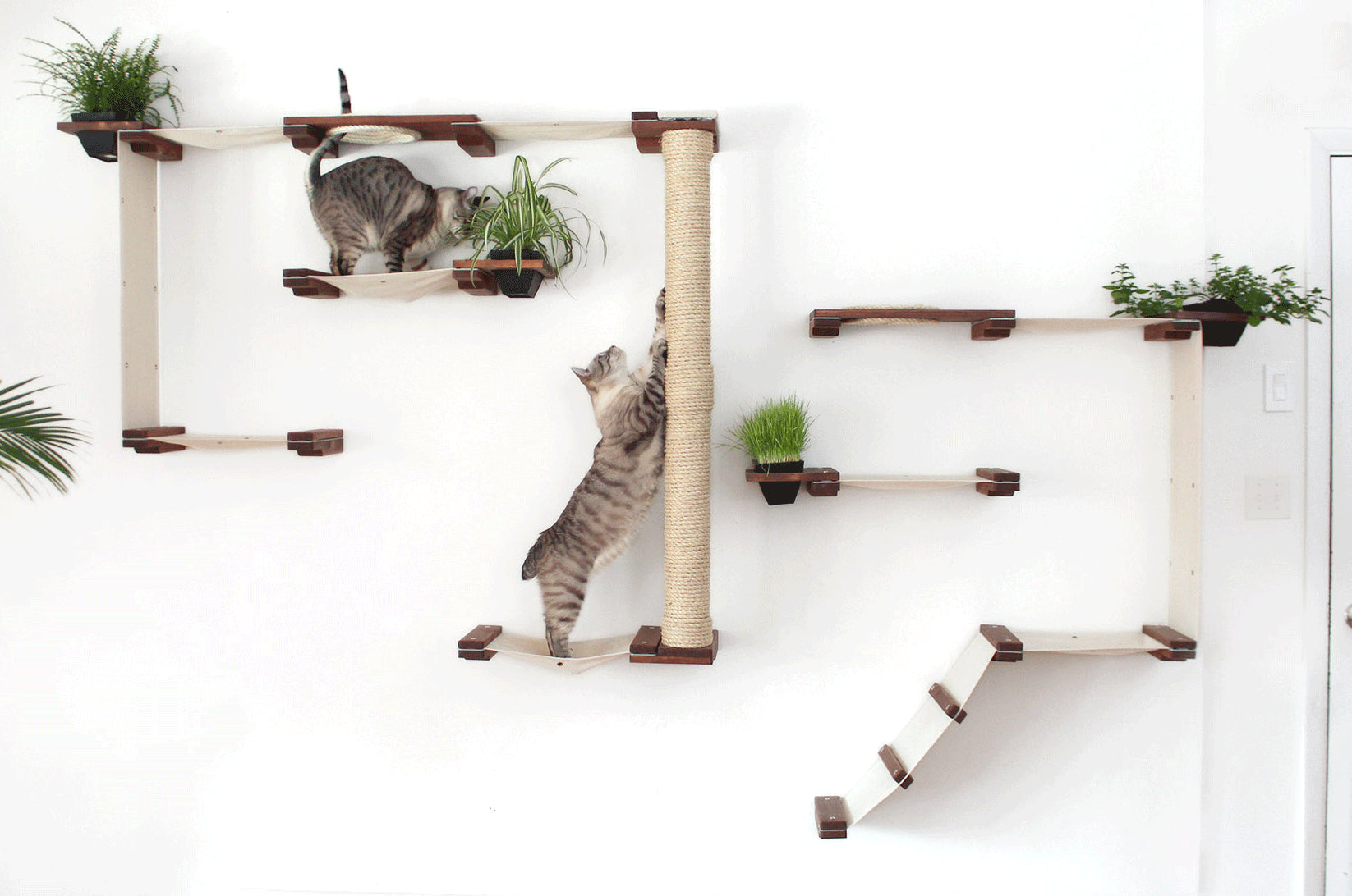 Catastrophicreations Cat Wall | Smack Bang Blog