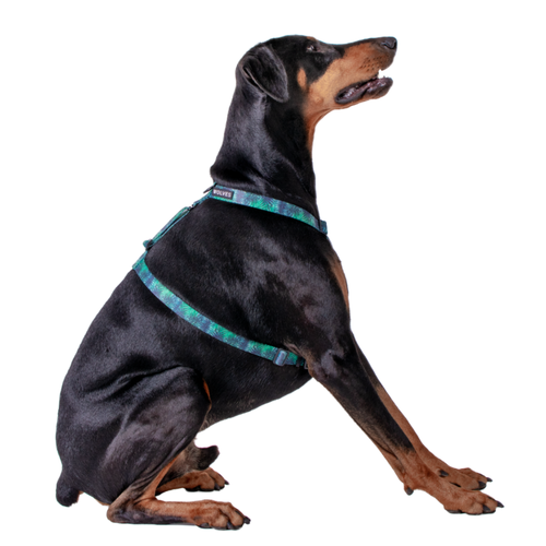 Wolves of Wellington Florida All Purpose Dog Harness | Smack Bang