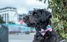 Wolves of Wellington Floss Bow Tie | Smack Bang