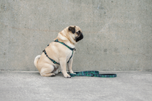 Wolves of Wellington Florida All Purpose Dog Harness Pug | Smack Bang