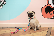 Wolves of Wellington Floss Standard Dog Lead Pug | Smack Bang