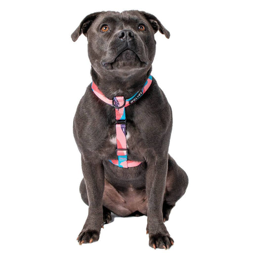 Wolves of Wellington Floss All Purpose Harness | Smack Bang