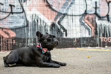 Wolves of Wellington Floss Bow Tie Frenchie | Smack Bang