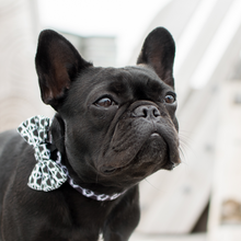 Wolves of Wellington Black And White Indy Dog Bow Tie | Lola the Frenchie | Smack Bang