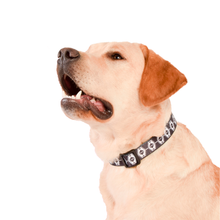 Wolves of Wellington Indy Dog Collar | Smack Bang