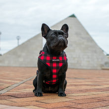 Wolves of Wellington Buffalo Mesh Dog Harness Lola the Frenchie | Smack Bang