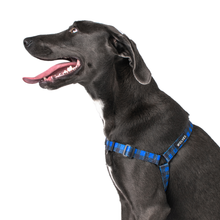 Wolves of Wellington Luey Front Clip No Pull Dog Harness | Smack Bang