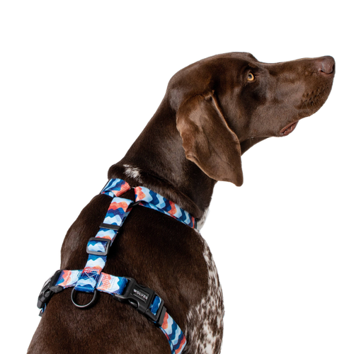 Wolves of Wellington Maverick All Purpose Dog Harness | Smack Bang