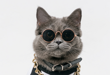 Cat Sunglasses NZ | Smack Bang