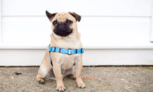 Wolves of Wellington Shaka Front Clip No-Pull Dog Harness Pug | Smack Bang