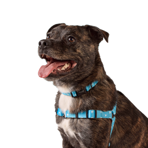 Wolves of Wellington Shaka Front Clip Dog Harness | Smack Bang