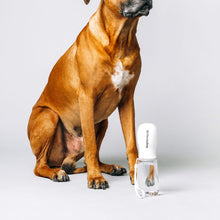Thirsty Dog Drink Bottle | Brilliant White | Smack Bang