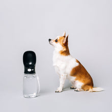 Thirsty Dog Drink Bottle | Jet Black | Smack Bang