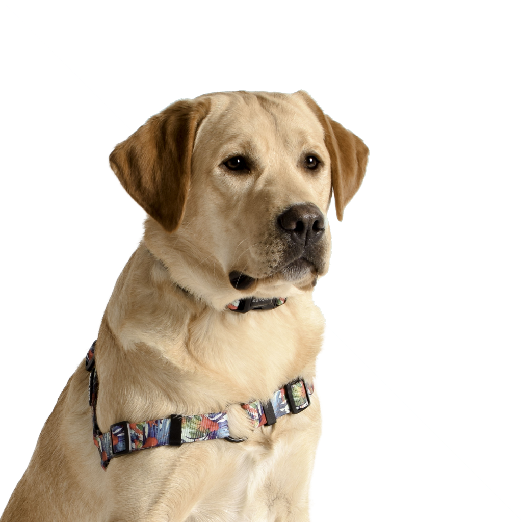 Wolves of Wellington Tropicool Front Clip Dog Harness | Smack Bang