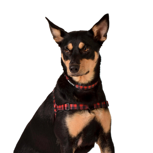 Wolves of Wellington Buffalo Front Clip Dog Harness | Smack Bang