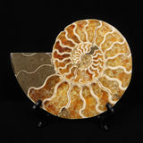 Crystallized Ammonite Split Pair from Madagascar