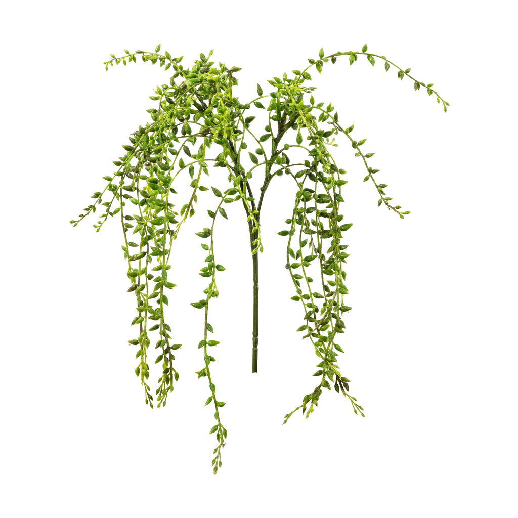 String of Pearls Vine Stems (3PK)