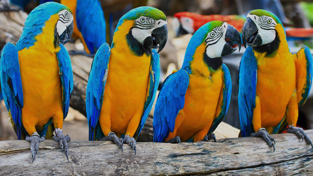 We Specialise In Parrots