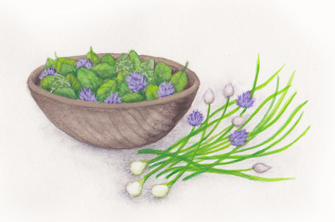 Chives herb illustration