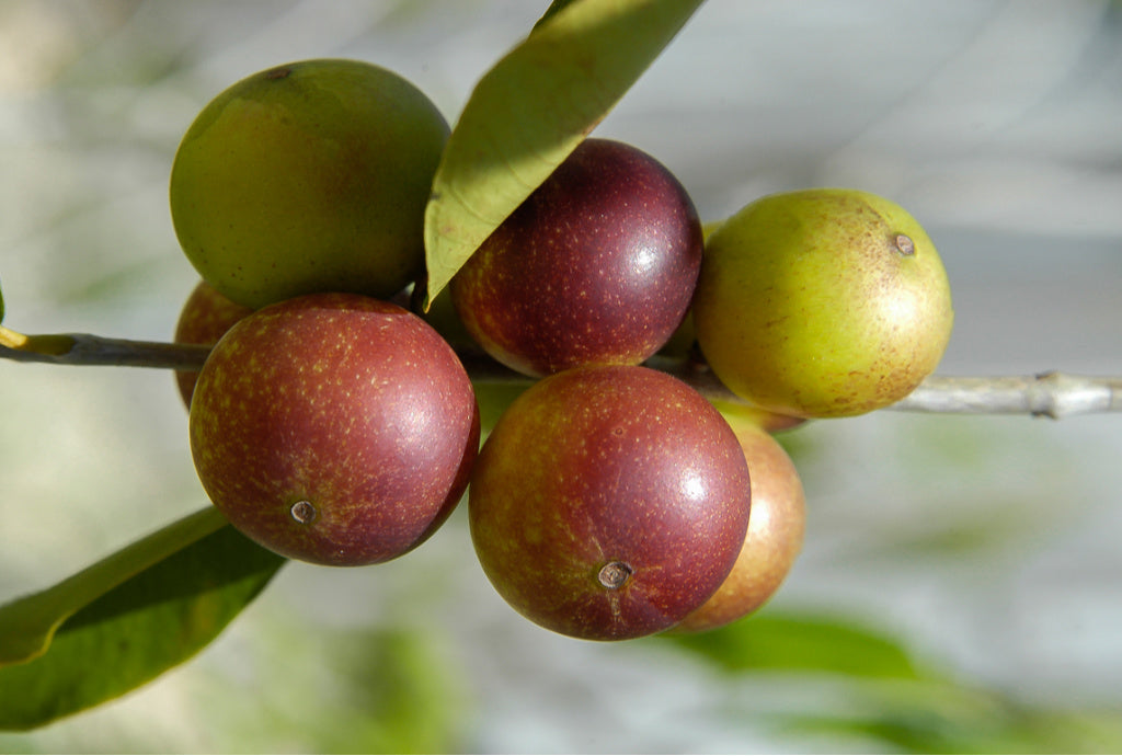 4 health benefits of Camu Camu