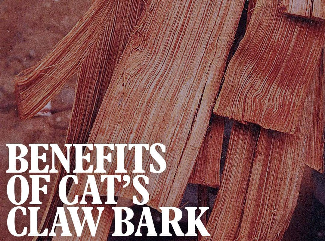 Benefits of Cat's Claw Bark