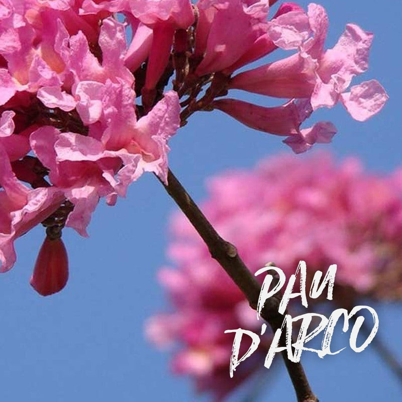 Benefits of Pau d'Arco