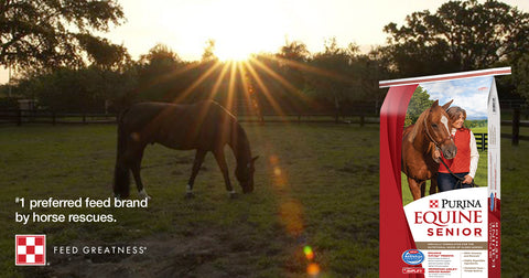Purina - A Home for Every Horse
