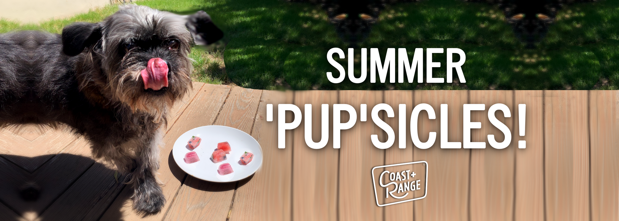 EASY SUMMERTIME 'PUP'SICLES!